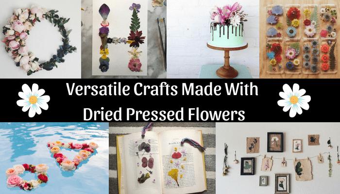 Dried Pressed Flowers