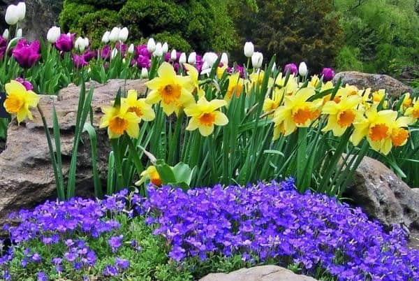 Five Tips for Your Best Spring Flower Garden Ever