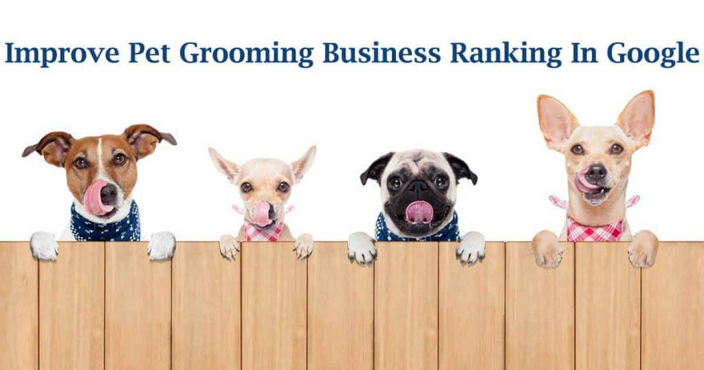Pet Grooming Business seo