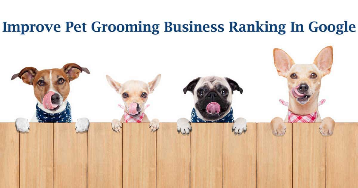 Pet Grooming Business seo