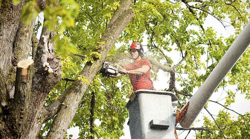 You Call a Tree Removal Service